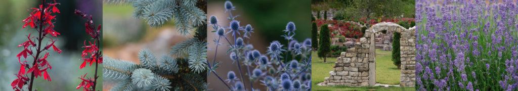 photo jardin fleur arbre lavande
